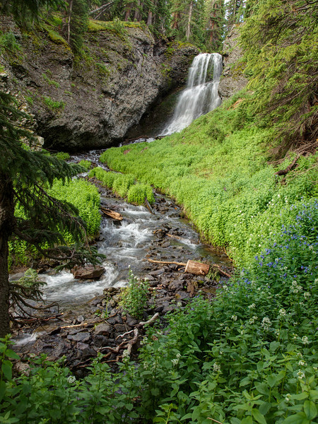 Water Fall, Stream and Wild Flower