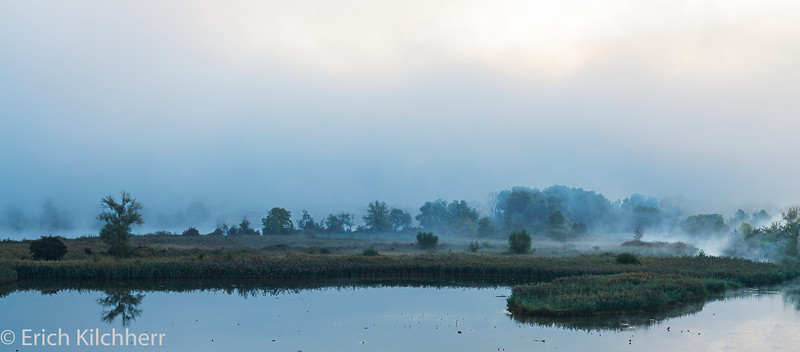 Reed in morning mist
