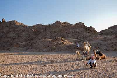 Sinai Desert-24