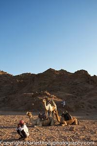Sinai Desert-25