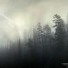 Black River Forest Fog