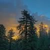 Pine Sky