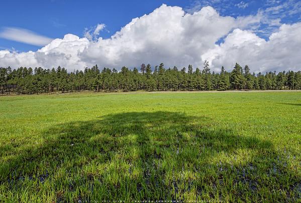 Horse Creek Meadow Monsoon