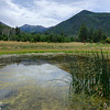 Lockett Meadow Reeds