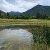 Lockett Meadow Reeds