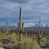 Snowy Desert Day
