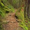 173  G Siouxon Creek Trail V