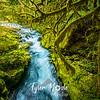 42  G Siouxon Creek Moss