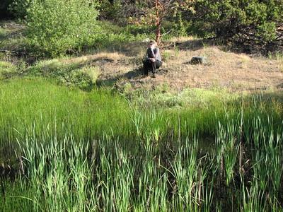 Happy Camp freshwater emergent marsh, CA