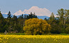 Mt-Baker-Skagit-Valley-05-2011