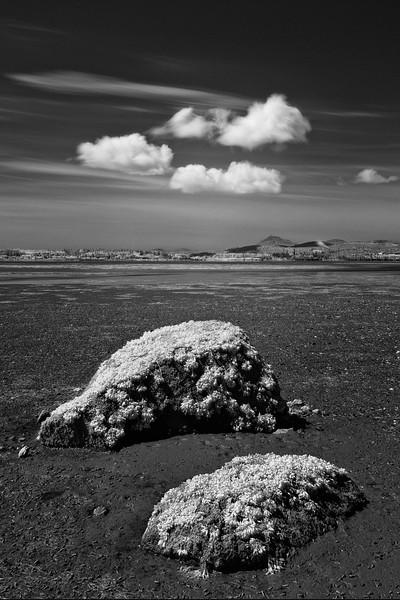 Padilla-Bay-05-2011