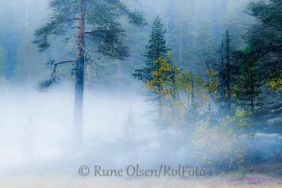 Disig på skogens bunn