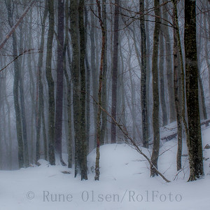 Snøstorm i bøkeskogen