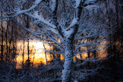 Ny vinterdag i bøkeskogen