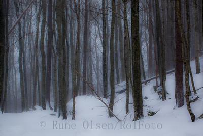 En disig vintermorgen i bøkeskogen