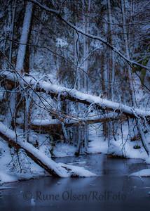 Urørt vinterskog