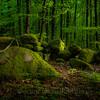 Skogen bakenfor den gamle grensa