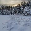 Vinterskumring
