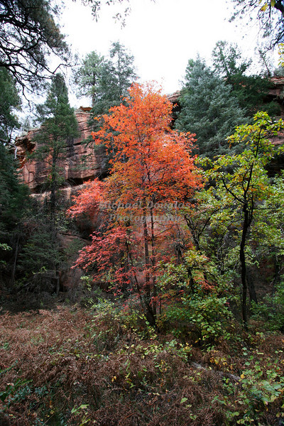 Slide Rock State Park near Sedona, Arizona