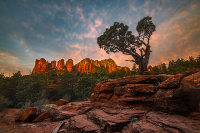 The Seven Sacred Pools on the Soldier Pass Road and Trail is an easy hike in Sedona. I found this majestic tree at the location that I could not resist photographing. Getting there for sunrise is a bit of a challenge as there are gates to the trailhead that do not open till much later.