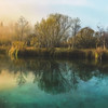 Zelenci Springs at Daybreak