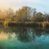 Zelenci Springs at Daybreak