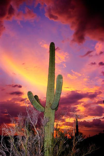 Slowflash and a saguaro