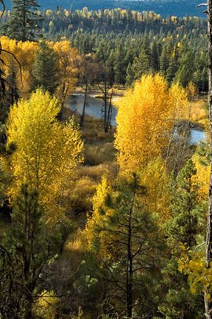 Fall Aspens, McCall, Idaho