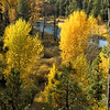 Fall Aspens, McCall, Idaho