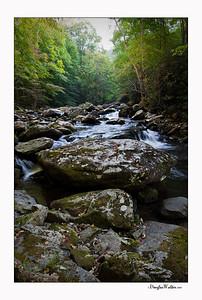 Smoky Mountains 2010