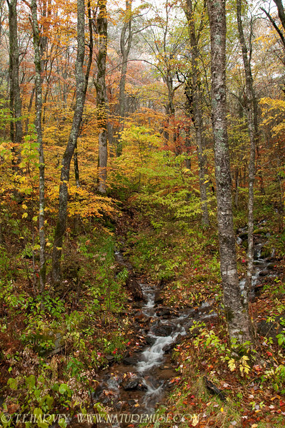 Double streams, Wayah Bald, N.C. in the Smoky Mountains.