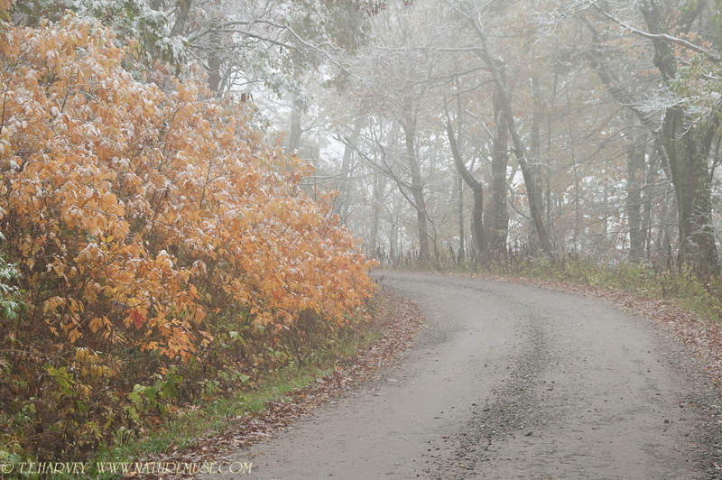 Snow and Fog, Wayah Bald, N.C. in the Smoky Mountains.