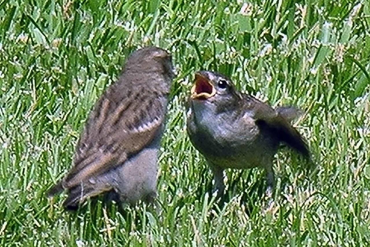 At Greenbelt Park - these birds were feeding each other