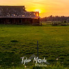 42  G Barn Sunset Bird