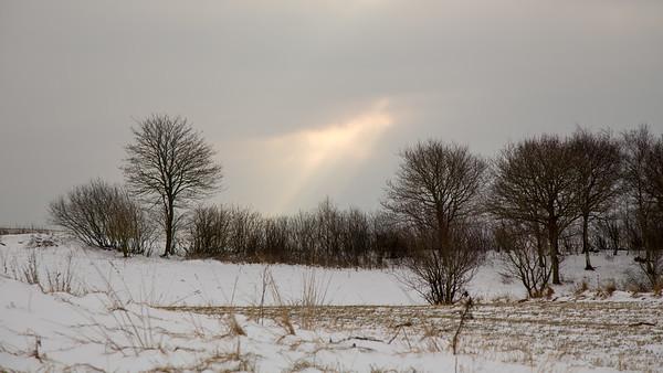 Lys over træer