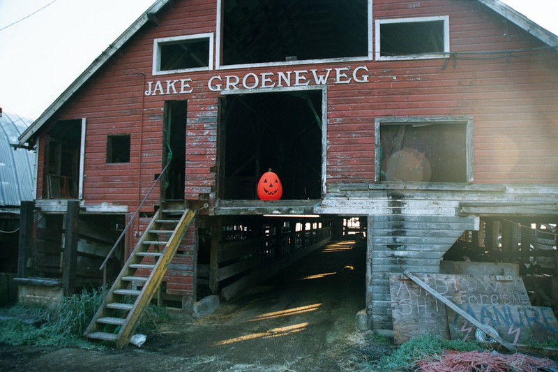 Halloween on a dairy farm