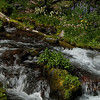 Snow Creek and Flowers