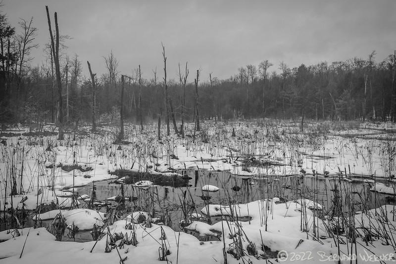 Snowy Wetlands