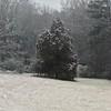 Snowing in Lilburn
