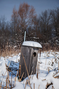 Milwaukee, Wisconsin A birdhouse by frozen Mud Lake.