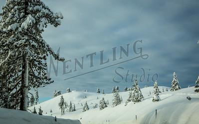 Wentling-8611