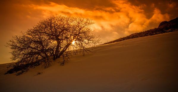 ~~ Fiery Tree ~~