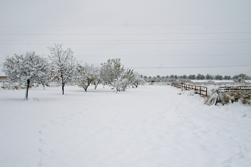 Snow in Roswell NM on Saturday after Thanksgiving 2007