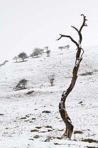 minimalist tree at malham cove DSC_6720