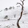 minimalist tree at malham cove DSC_6720