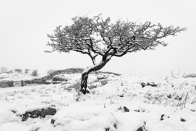 hamsfell tree and gate DSC_5233