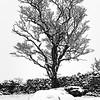 hamsfell tree and rock DSC_5259a