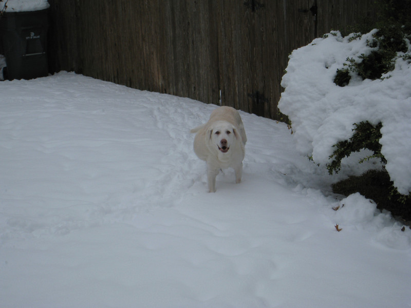 Murphy loves exploring, even in the snow.
