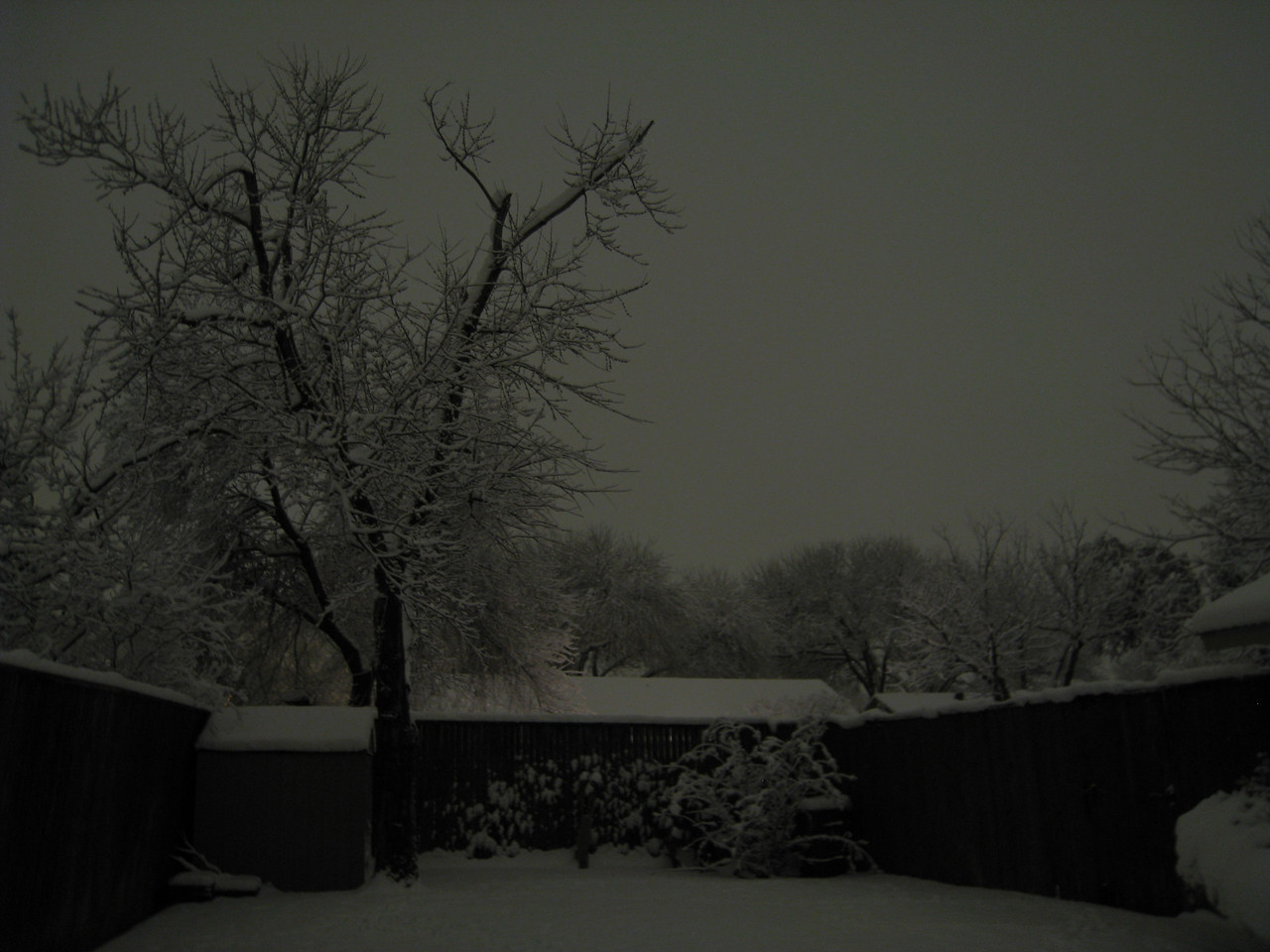 Photo taken at 10pm in the back yard.