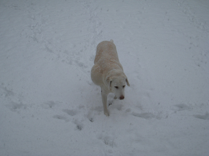 Murphy has no problems with the snow